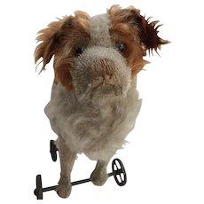c.1900's Antique Steiff FF Underscore St. Bernard Dog on Wheels