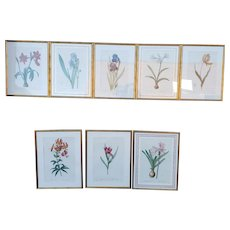 Set 8 Different Late 20th Century Framed Pierre-Joseph Redouté Botanical Prints