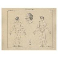 19th Century,Antique,Original,Engraving,Human physiology,Internal Organs ,Human Anatomy,Human Skeleton.