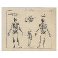 19th Century,Antique,Original,Engraving,Human physiology,Internal Organs ,Human Anatomy,human skeletons,
