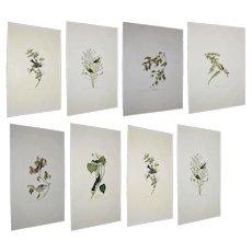 Group of 16 Original,Birds Prints from,The Birds of America by,John James Audubon,Foolish,Spotted,Sandpiper.Noddy Tern