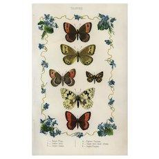 19th Century,Authentic,Antique,Hand colored,Lithograph print,Butterflies And Moths,papillon,Decorative art,wall art,art decor