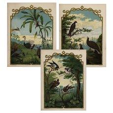 Set of three,Mid,19th century,Antique,original, Color,lithograph print of birds,