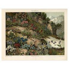 Original antique botanical print of alpine flowers