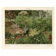 Antique original lithograph print of Wild flowers fold out print