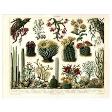 19th Century Antique original lithograph print of cactus plan fold out print
