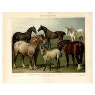 19th Century ChromoLithograph print of Horses from German Encyclopedia Brehms Tierleben 1887