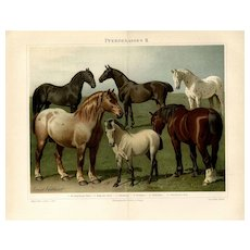 19th Century ChromoLithograph print of Horses from German Encyclopedia Brehms Tierleben 1887