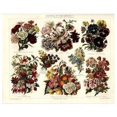 Antique original lithograph print of various flowers plan fold out print