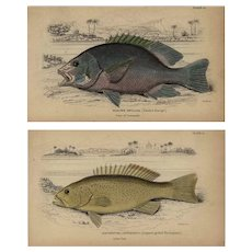 Set of two,19th Century,Authentic,original,natural history,handcolored Fish Prints, Jardine Sir william