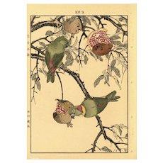 Japanese,woodblock.lithograph print,Meiji,period,flower and Bird,Keinen Imao