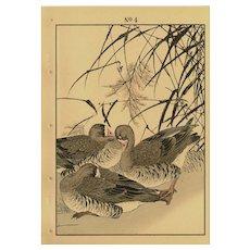 Japanese,woodblock.lithograph print,Meiji,period,flower and Bird,Keinen Imao,ducks