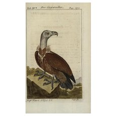 18th Century,Authentic,Antique,natural history,bird,hand colored,engraving,vulture