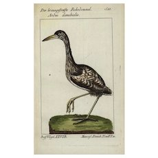18th Century,Authentic,Antique,natural history,bird,hand colored,engraving,Ardea Danubialis,Heron