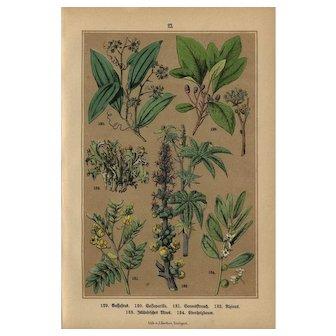 19th Century,Antique,original,color lithograph print,Various plants and flowers
