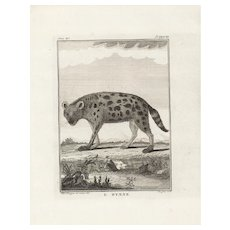 18th Century,Original,Authentic,Copper Engraving,Animal,wildlife,Natural History,Hyena