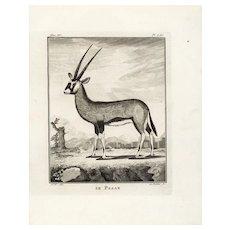 18th Century,Original,Authentic,Copper Engraving,Animal,wildlife,Natural History,Le Pasan