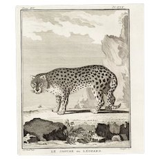 18th Century,Original,Authentic,Copper Engraving,Animal,wildlife,Natural History,Leopard,Jaguar