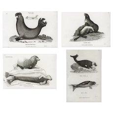 Set of four,Original,19th century,Authentic,Black and white,Engraving,Seals,Sea-life
