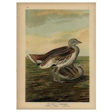 Authentic,Original,19th Century,color,lithograph print,Various birds,natural history,Bird Art