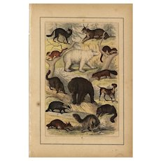 19th Century,original,antique,natural history print of Animals,hand colored