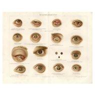 19th Century ChromoLithograph print of Human anatomy eyes German Encyclopedia Brehms Tierleben 1887