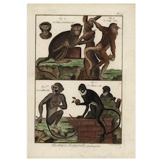 18th Century,Authentic,Original,Antique,cooper Engraving,Natural History,Apes,Monkey,Wildlife,Nature Print