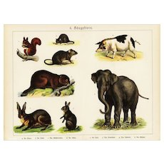 19th Century,Original,Antique,Hand Colored Print,Center Fold,Wildelife,Elephant,Rabbit,Pigs,squirrel