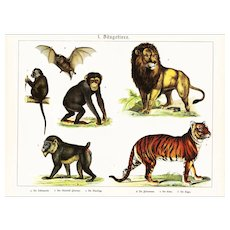 19th Century,Original,Antique,Hand Colored Print,Center Fold,Wildelife,monkey,tiger,lions,cats
