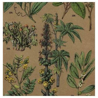 19th Century Antique original  color lithograph print of various plants and flowers