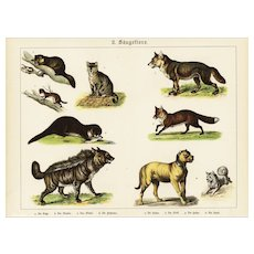 19th Century,Original,Antique,Hand Colored Print,Center Fold,cats,dogs,fox,wildlife