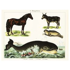 19th Century,Original,Antique,Hand Colored Print,Center Fold,sea life,Ocean,fish,Sperm Whale,seals,horse,mule