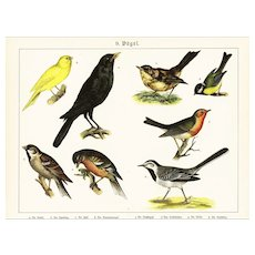 19th Century,Original,Antique,Hand Colored Print,Center Fold,various brids,finch,sparrow,Crow