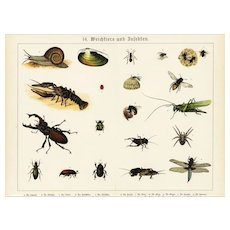 19th Century,Original,Antique,Hand Colored Print,Center Fold,Insects,grasshopper,dragonfly,bee,cricket