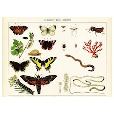 19th Century,Original,Antique,Hand Colored Print,Center Fold,insects,butterflies,Moths