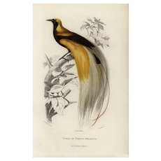 19th century,Antique,Natural History,bird Print,original,hand colored,Bird of paradise