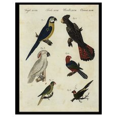 18th Century,Authentic,natural history,hand colored,Engraving,Birds,Parrots,