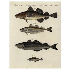 18th Century,Authentic,natural history,hand colored,Engraving,Sea life,various fish