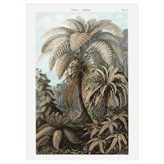19th Century,Original,Authentic,Color,Lithograph print,Palm trees,Large folio