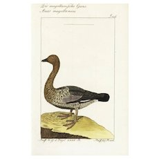 18th Century,Authentic,Antique,natural history,bird,hand colored,engraving,Rare
