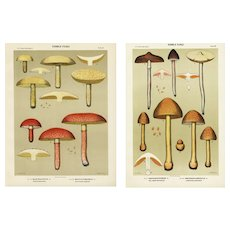 set of two Edible Fungi Lithograph print, Mushrooms, Kitchen Decor,home decor, decorative art,original antique print