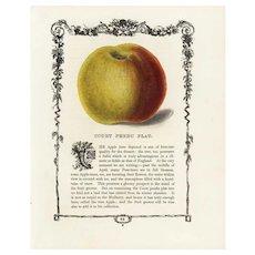 19th century Hand colored lithograph print of apple,decorative art, original art,