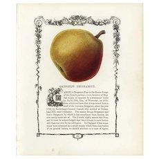 19th century Hand colored lithograph print of  Pear decorative art, original art,