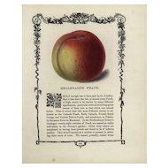 19th century Hand colored lithograph print of Bellegrade Peach,decorative art, original art,
