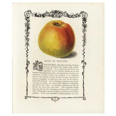 19th century Hand colored lithograph print of King of pippins, decorative art, original art,