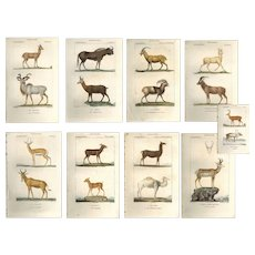 Set of 9 original Antique Hand colored Animal Engravings from P.J.F TURPIN 1816 First Edition , Deer, antelope etc etc