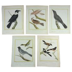 18th Century Collection of 5 old-coloured engravings by Martinet out of Buffon, c. 1780