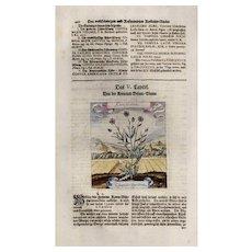 18th Century, Authentic, Michael Bernhard Valentini,Botanical floral,manuscript,hand colored,engraving,master engraving