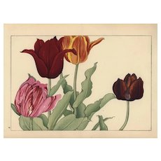 Antique Original Japanese Woodblock print from  Tanigami Konan Western Flower Woodblock Album Tulips