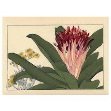 Antique Original Japanese Woodblock print from  Tanigami Konan Western Flower Woodblock Album